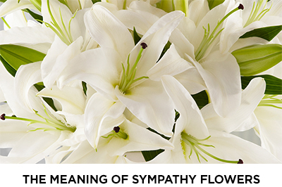 Article: The Meaning of Sympathy Flowers