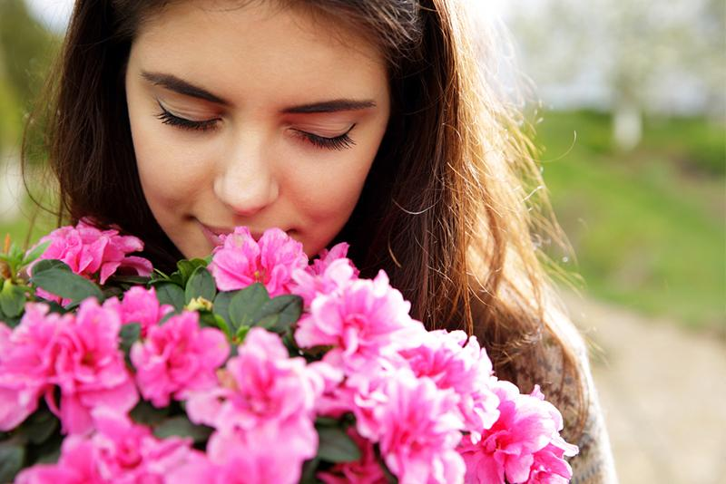 Allergy Guide Flowers and Plants