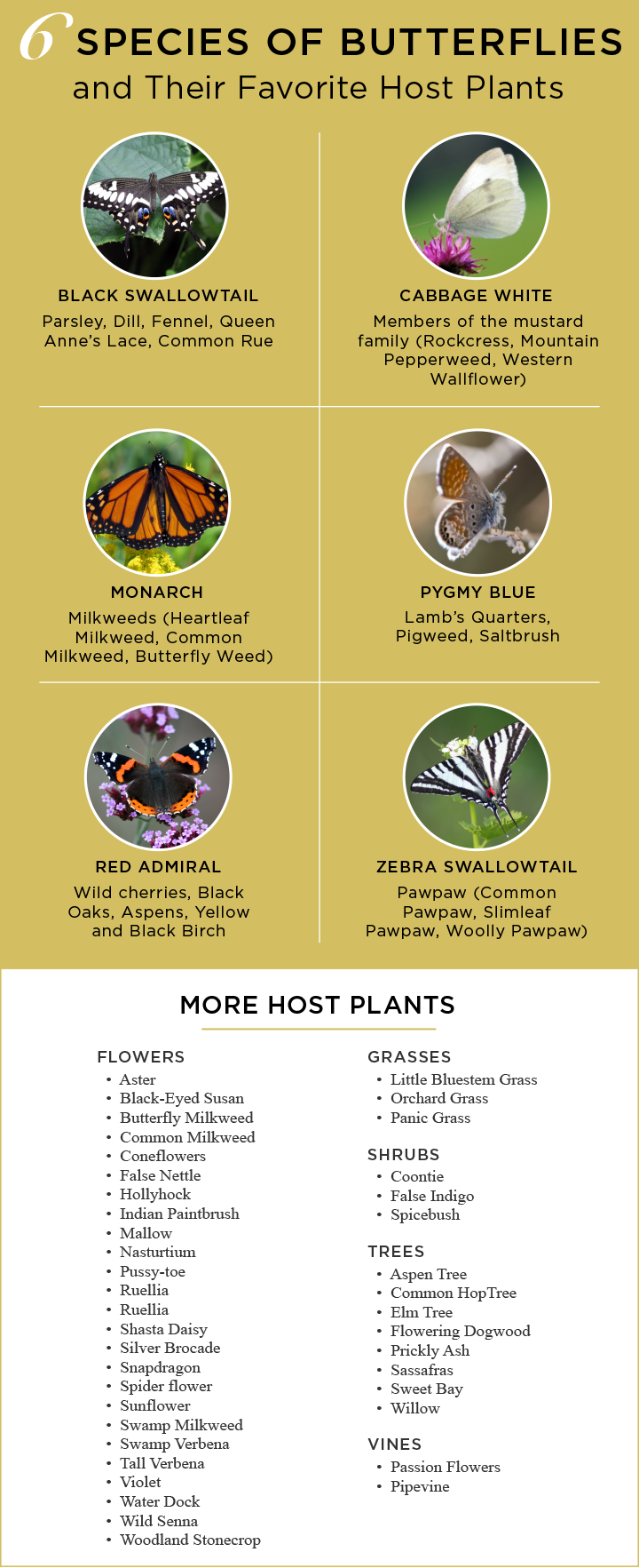 host plants to attract butterflies
