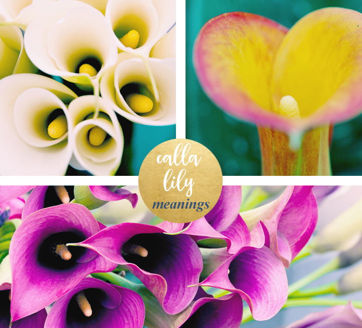 flower-meanings-calla-lily1