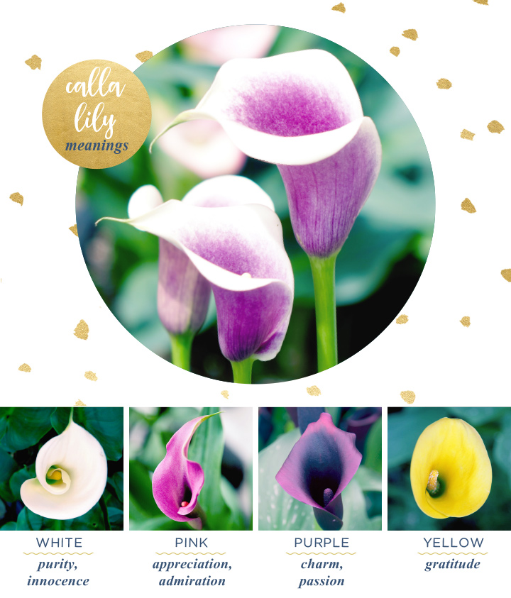 flower-meanings-calla-lily2
