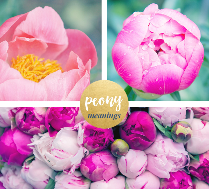 flower-meanings-peony1