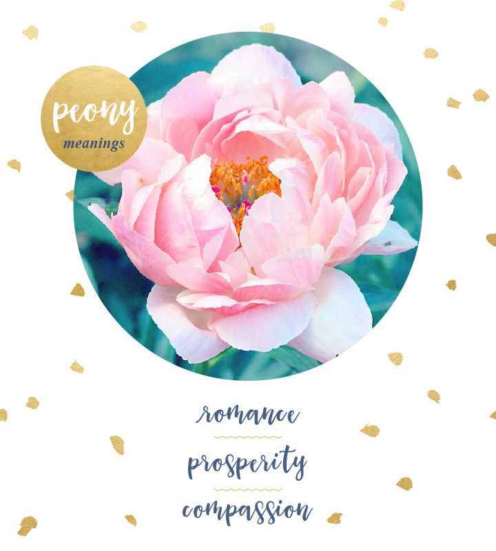 flower-meanings-peony2