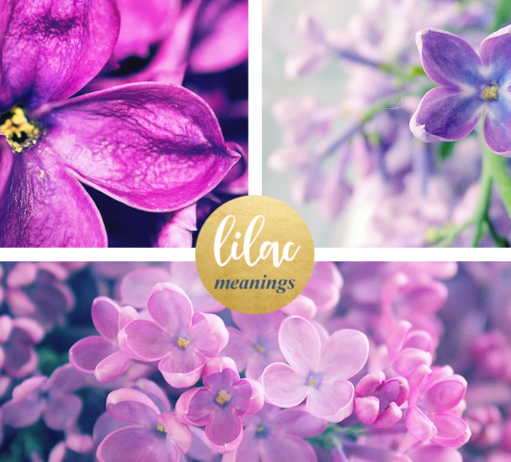 flower-meanings-lilac1