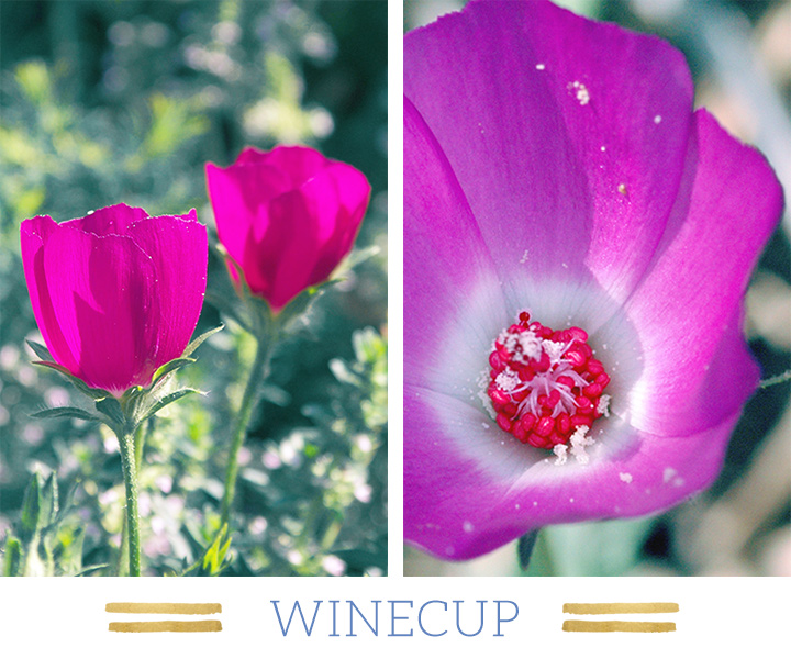 winecup