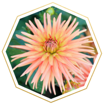 aster meaning and symbolism