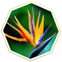 bird of paradise meaning and symbolism