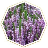 heather meaning and symbolism
