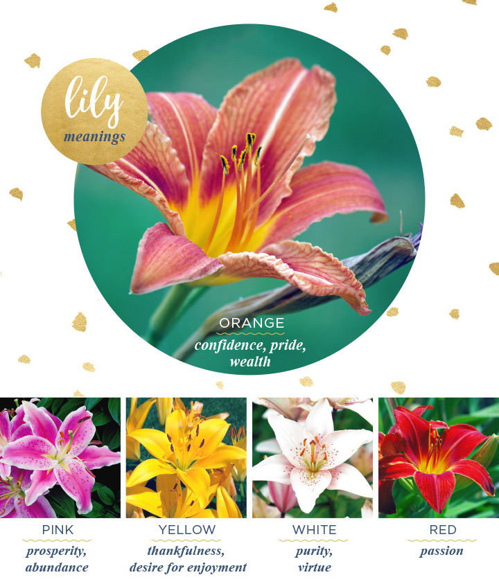 lily types and meanings
