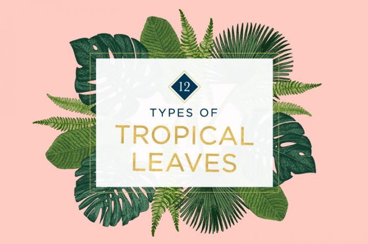 types of Tropical leaves