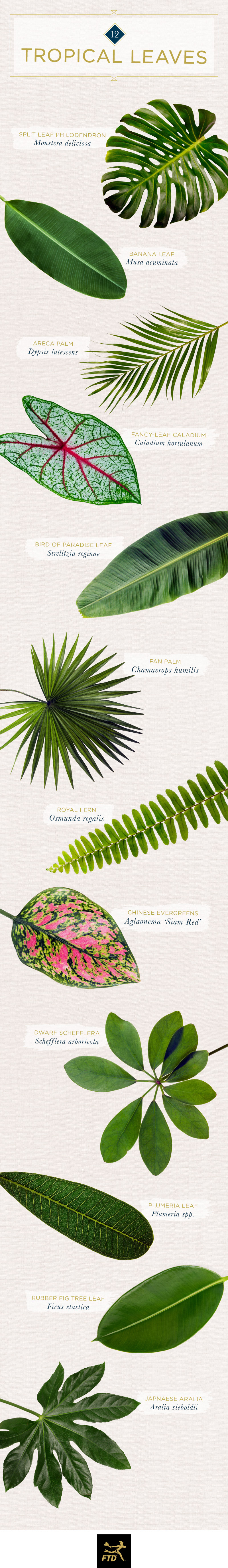 tropical leaves infographic