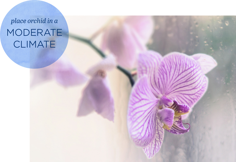 how to rebloom orchids environment