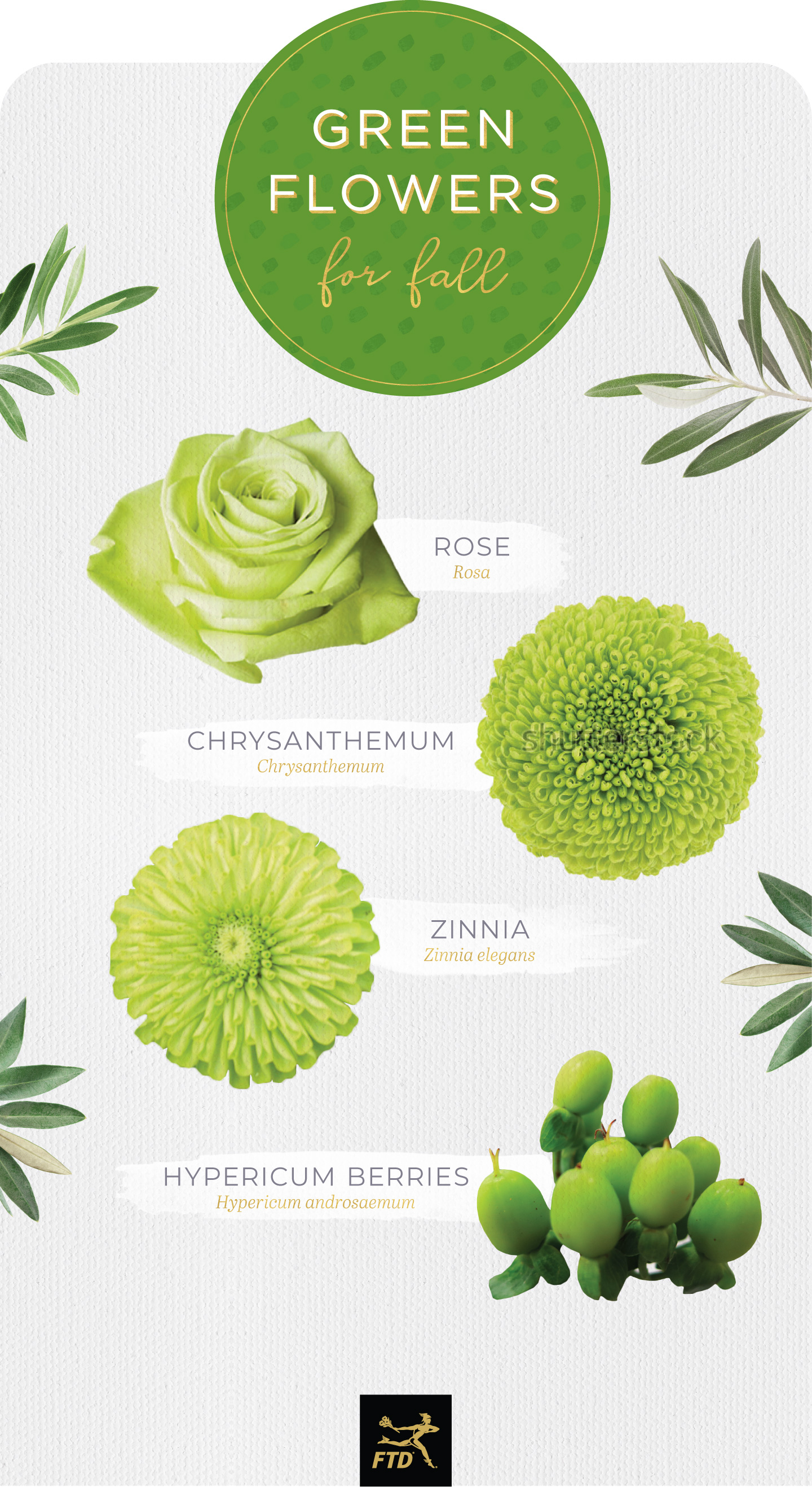 types of green flowers fall