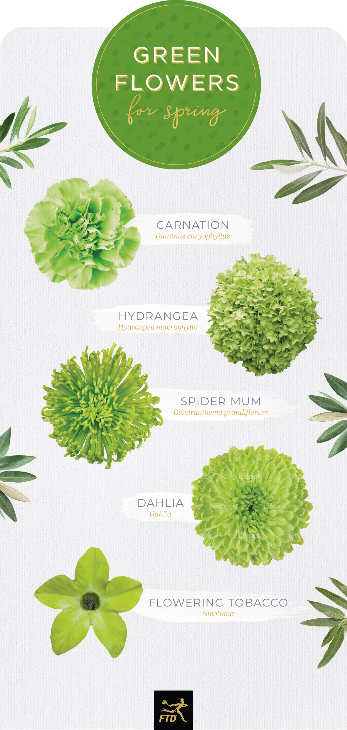 types of green flowers spring