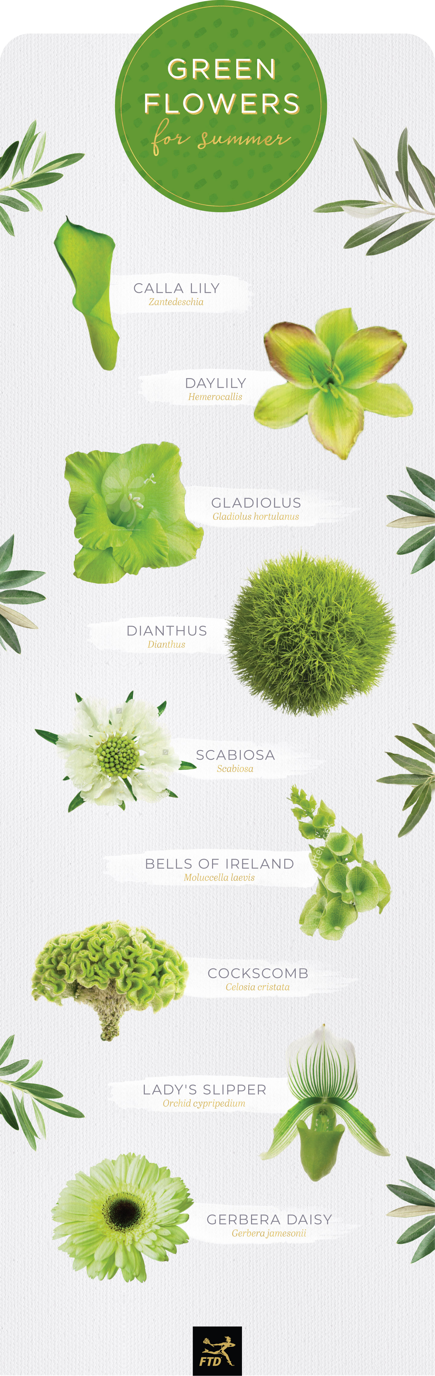 types of green flowers summer