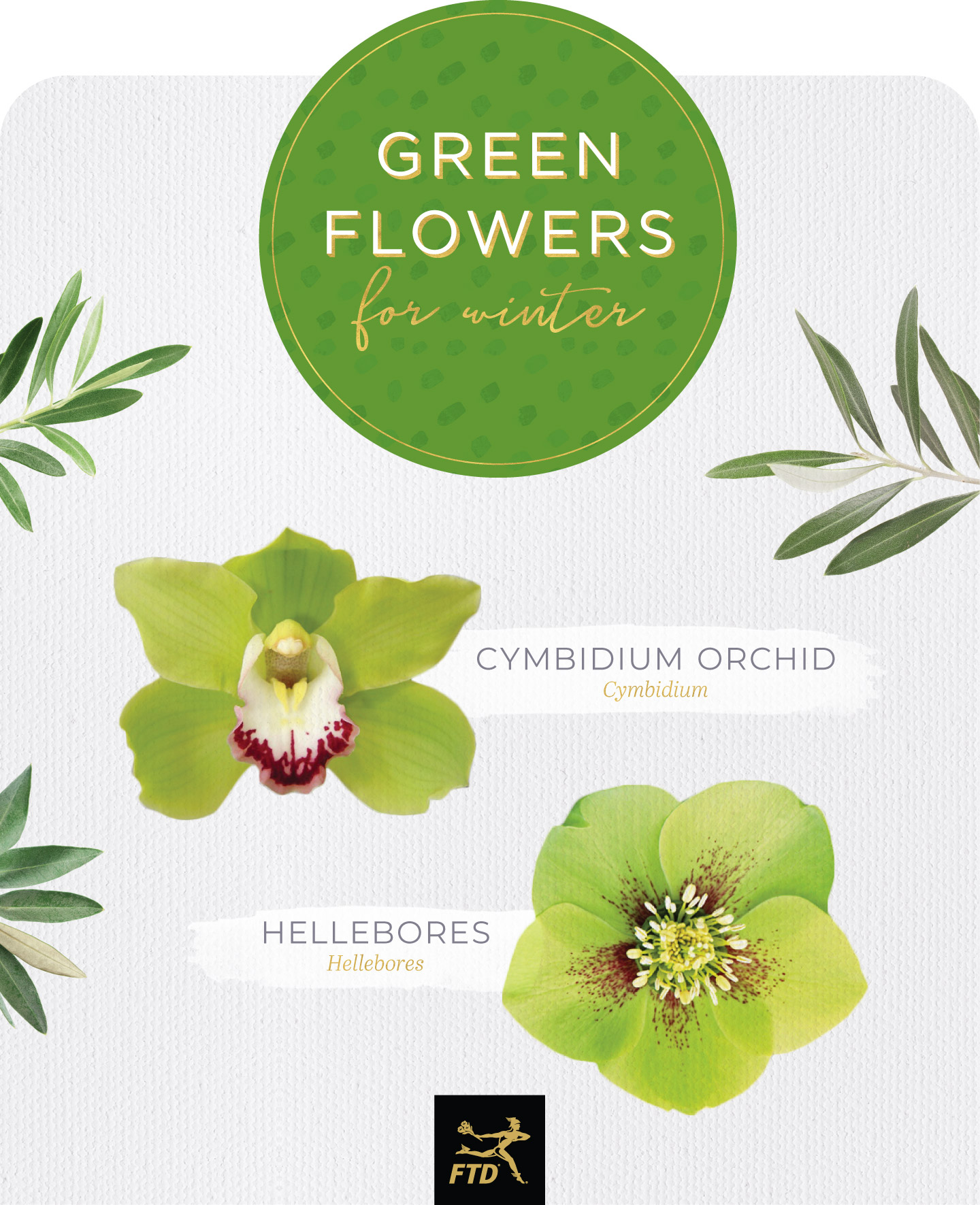 Types of green flowers winter