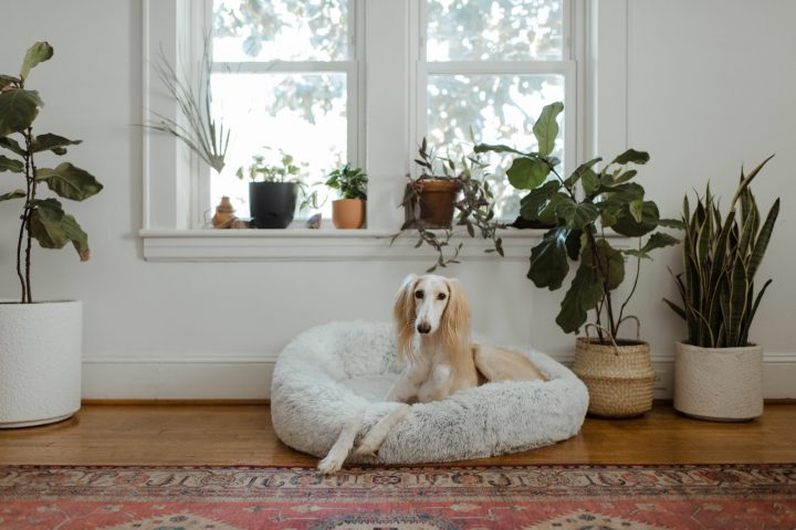 Dog sitting in house with plants