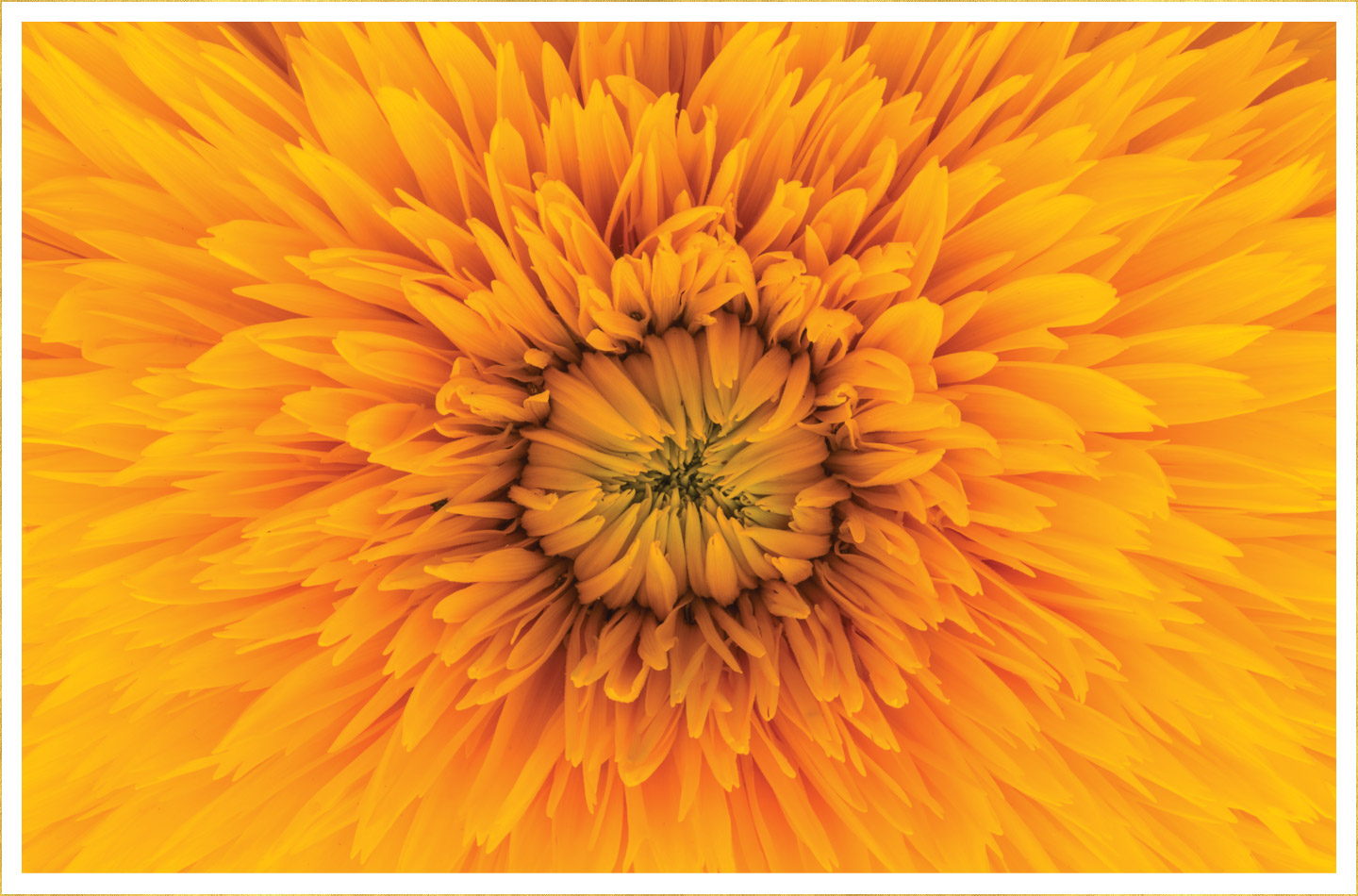 30 Types Of Yellow Flowers Ftd Com It seems to have recovered from what was perceived as a slightly affected. 30 types of yellow flowers ftd com