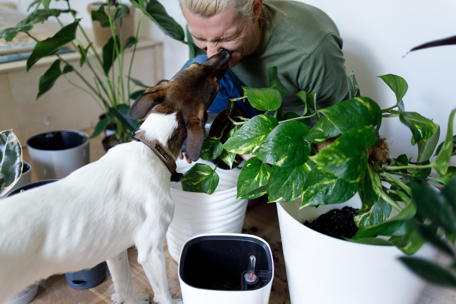 Dog with owner near plants