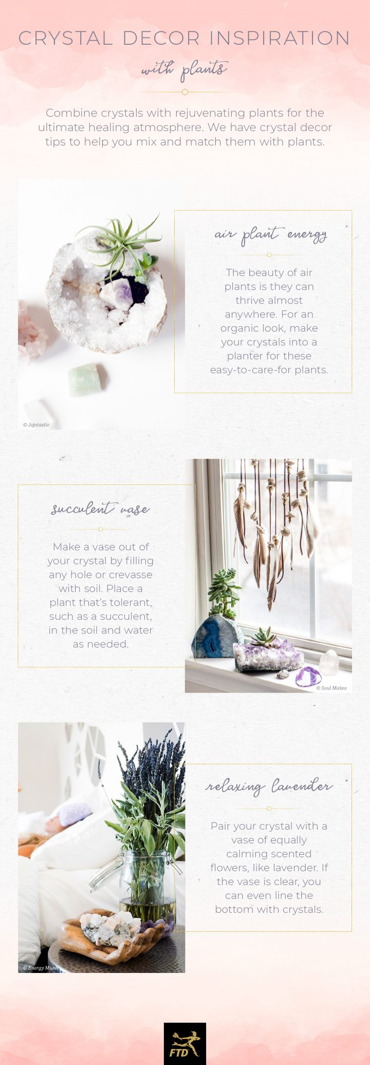 Crystals In Your Home - Plants Infographic