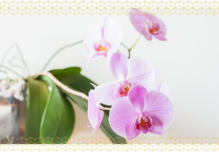 How to Care For Orchids - After They Bloom