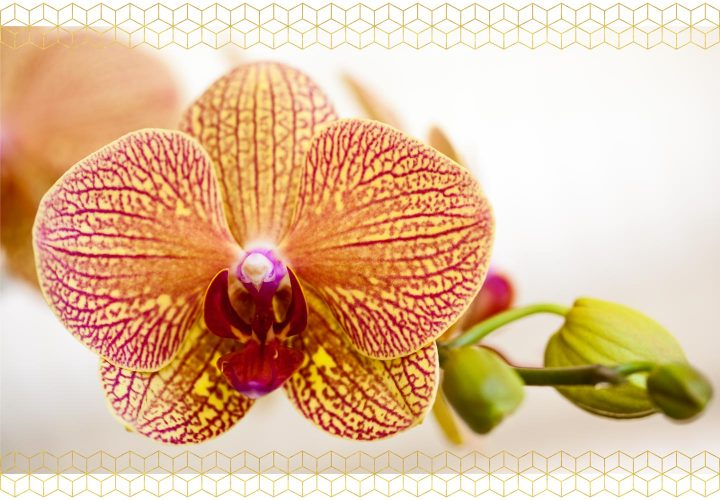How To Care For Orchids - Life Span