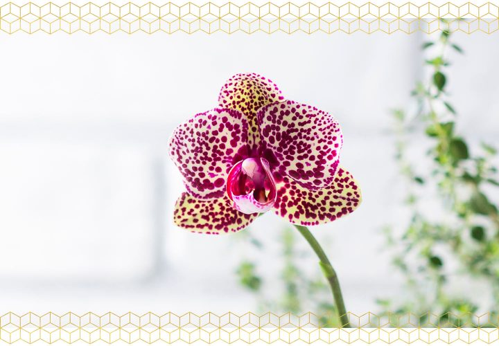 Caring For Orchids How To Grow