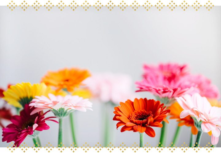 The Complete Gerbera Daisy Care Guide