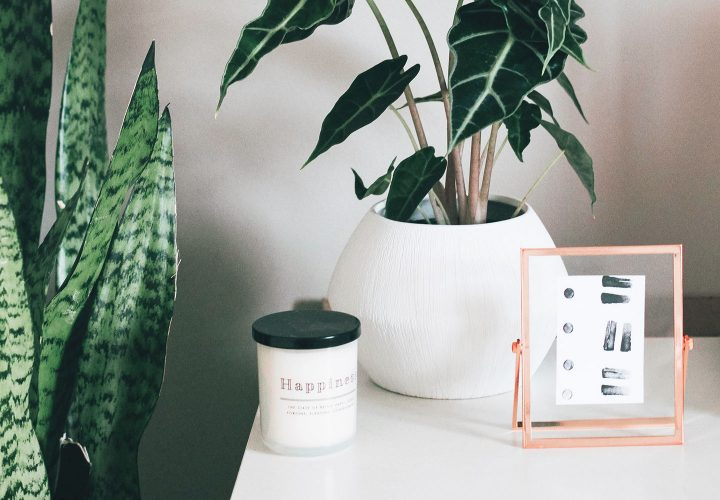plants on a table with candle and frame.