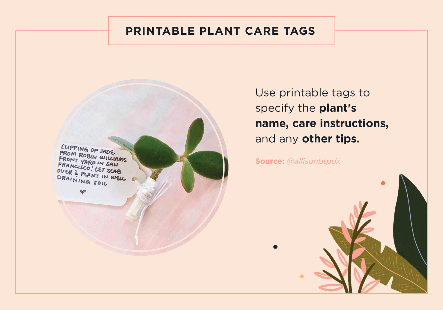 plant care tag on pink background