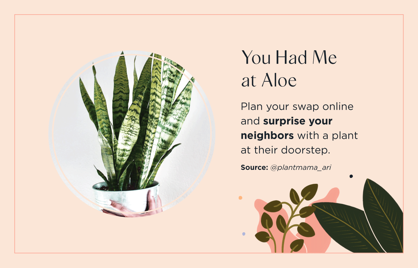 person holding an aloe plant