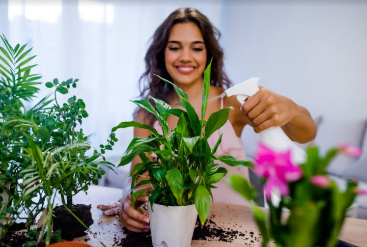 National House Plants Day