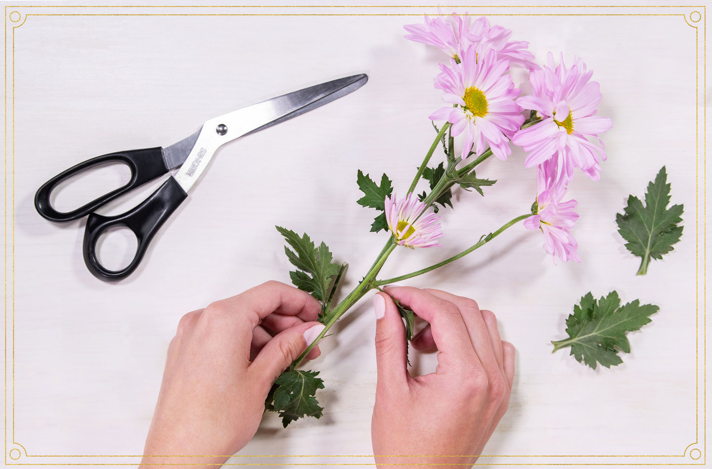 pulling off stems of a flower