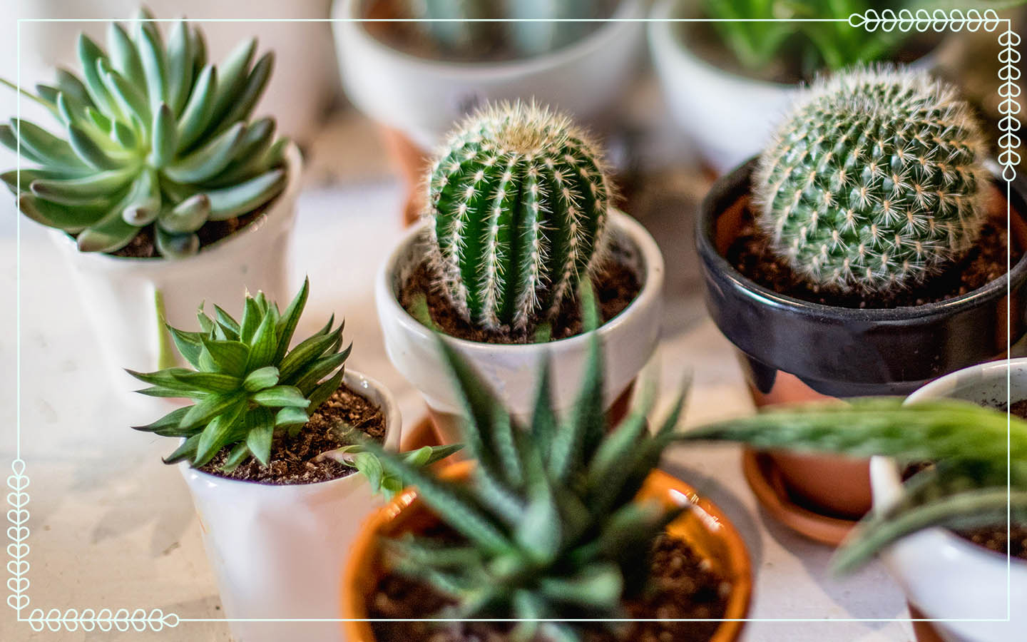 small cactus succulents in multicolor pots on a white table