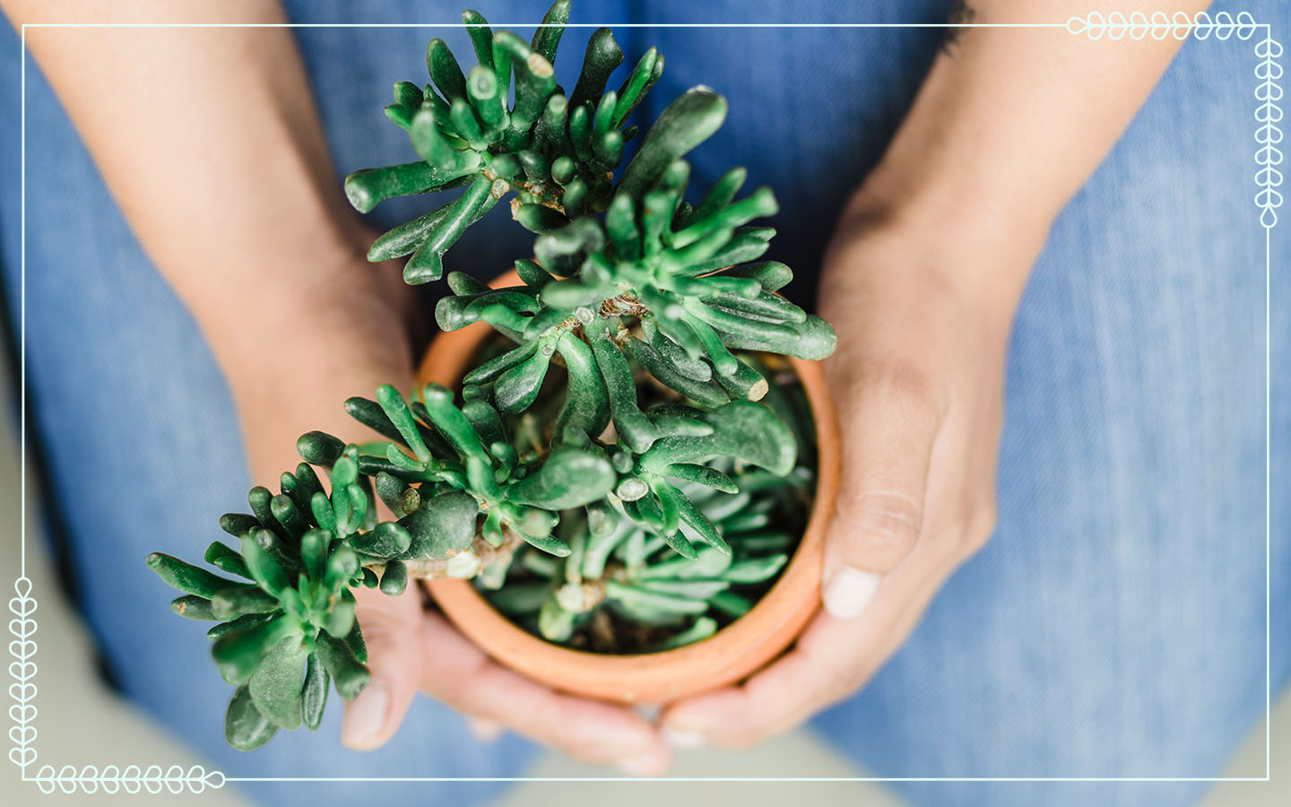 person kneeling while holding sedum succulent in a pot