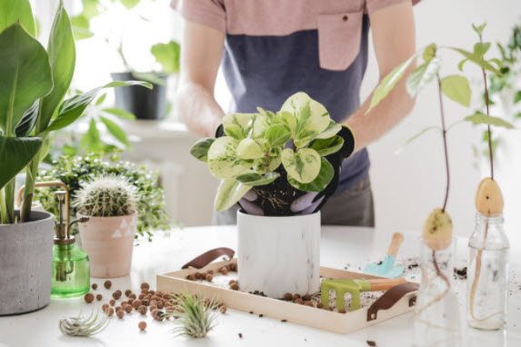 House Plant Care Guide & Tips