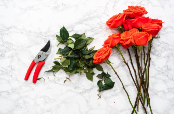 How to Prune Flowers with Shears