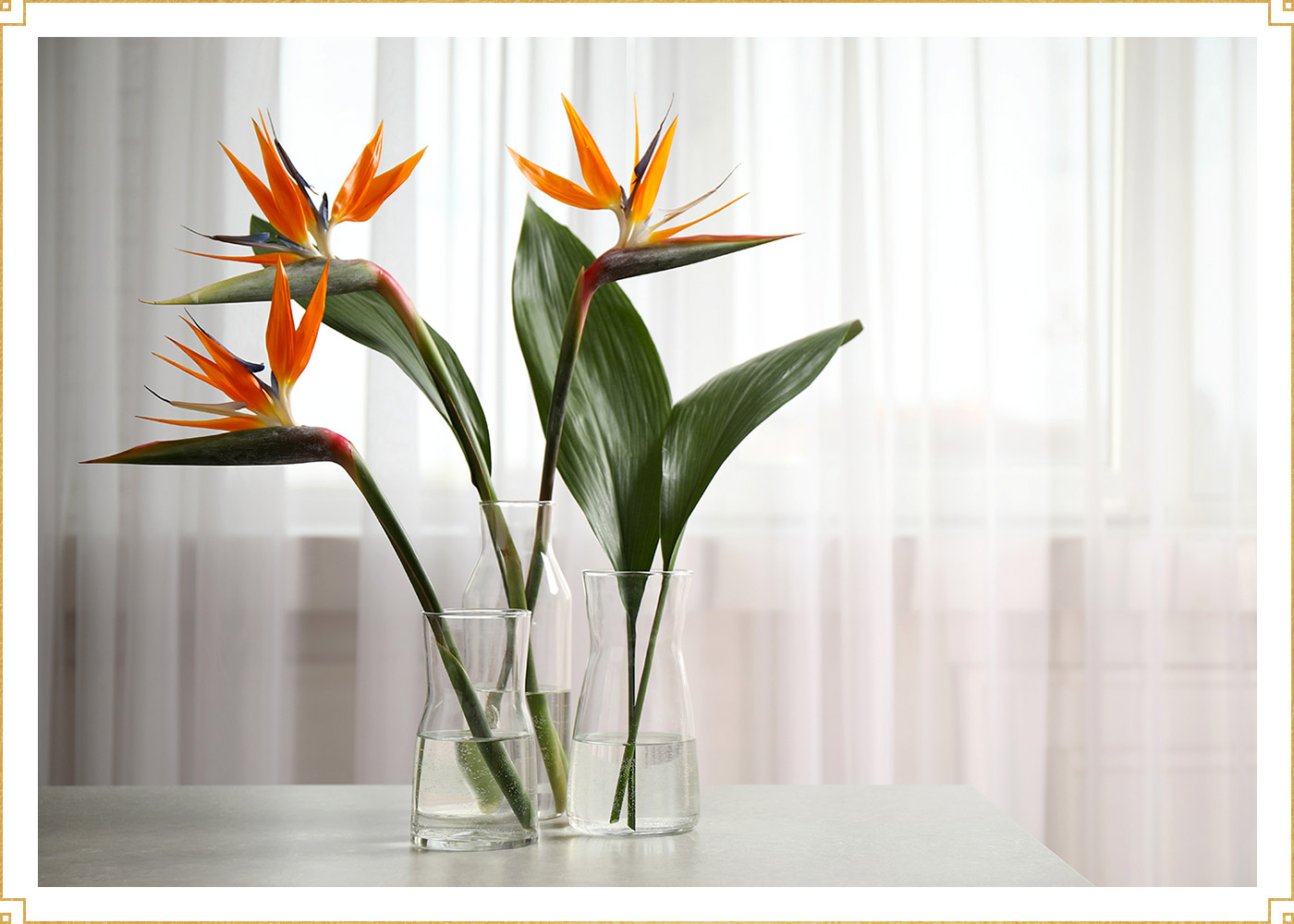 vase of birds of paradise flowers