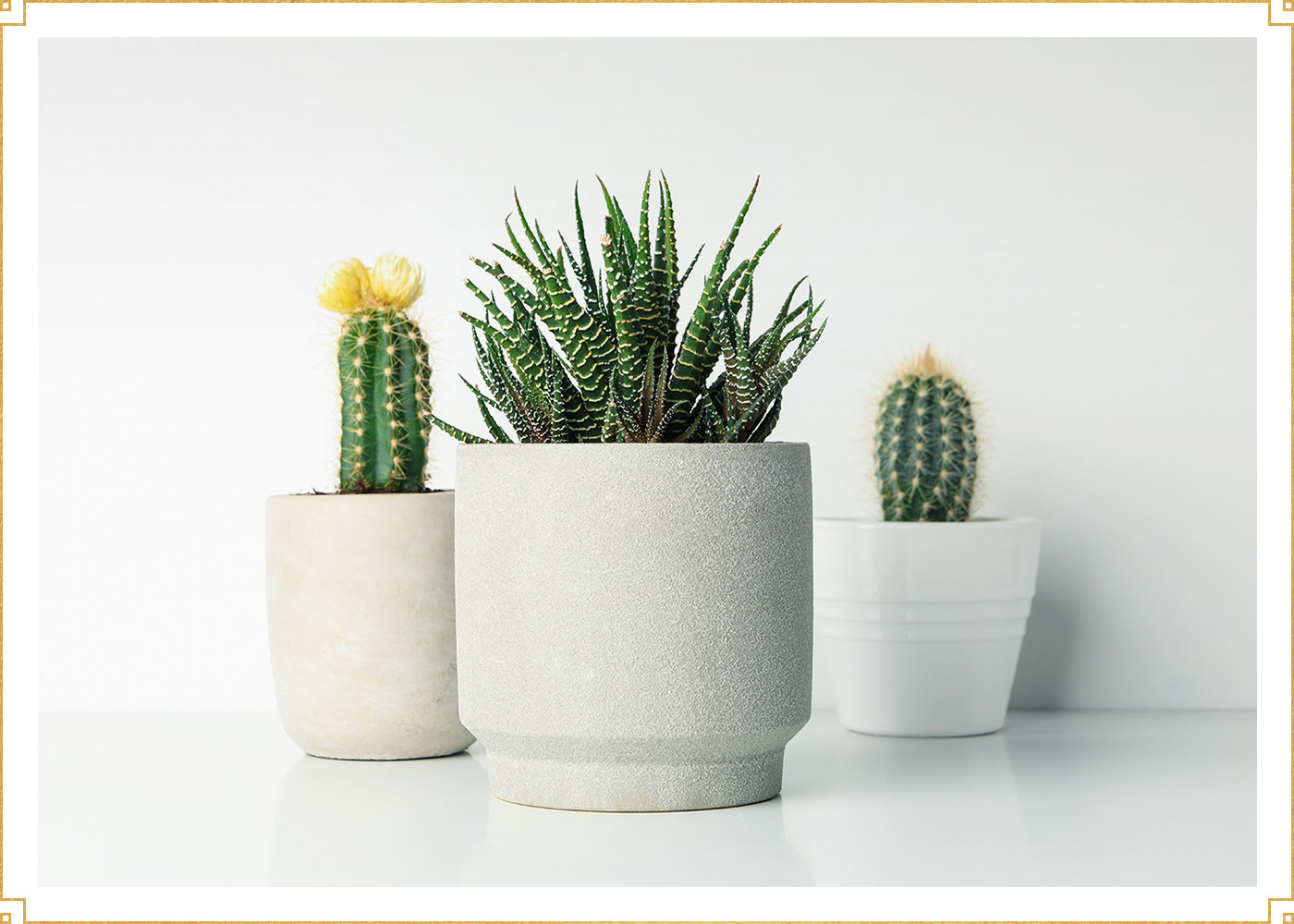 photo of three succulents