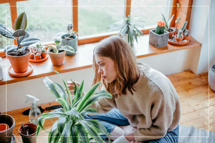 girl looking at houseplant