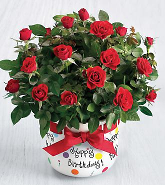 The FTD® Birthday Party® Planter