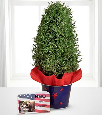 American Dreams Rosemary Tree With Free Cookbook