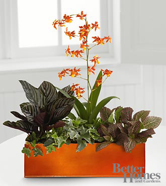 The FTD Vibrant Beauty Windowbox By Better Homes And Gardens
